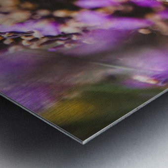 IMG 7694 Metal print