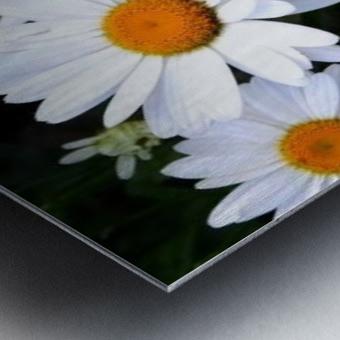 10392131_650028012172_7161699_n Metal print