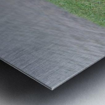 458553_10101518966241952_1018749152_o Metal print