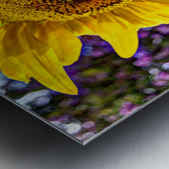 Sunflower Creative Metal print