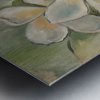 Plumeria  Metal print