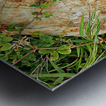 Brown Sandstone Rock With Grass Metal print