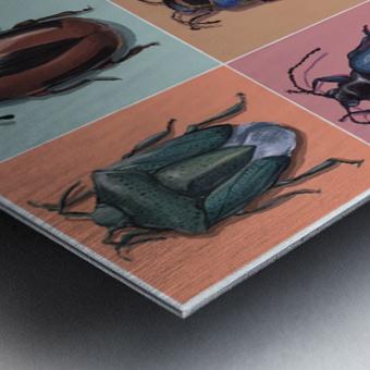 Assorted Beetles Metal print