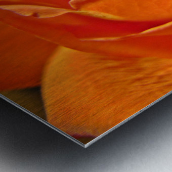 Passion Flower Impression metal
