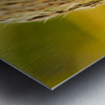 Flamboyantes Graminees no. 6 - Flamboyant Grasses no. 6 Impression metal