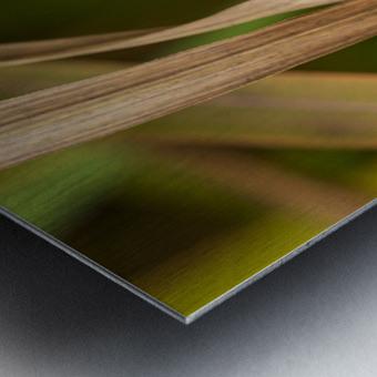 Flamboyantes Graminees no. 5 - Flamboyant Grasses no. 5 Impression metal