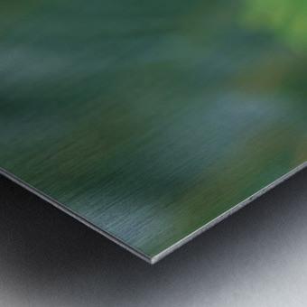 landscape_2_0046 Metal print
