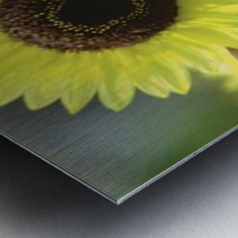 landscape_2_0976 Metal print