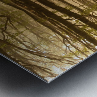 Paradoxical Forest Metal print