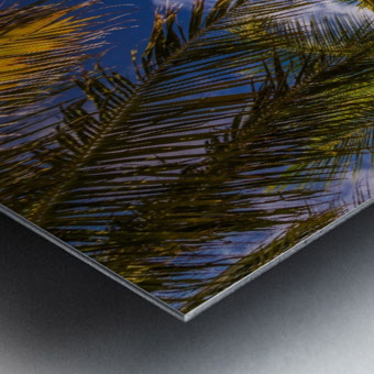 Palm trees low angle view Metal print