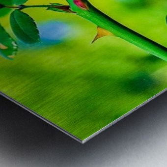 MHPBartlettArboretum 10 Metal print