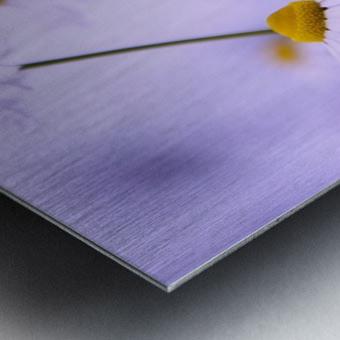 Chamomile in spring Metal print