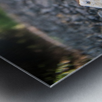 P1450797 Metal print