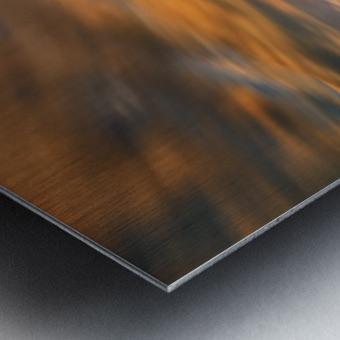 Cypresses... Metal print