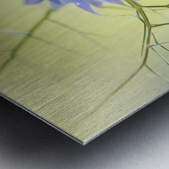 Nigella Metal print