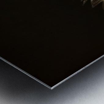 Iguana profile Metal print