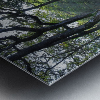 Dewerstone Woods Metal print