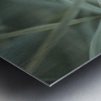 ; Metal print
