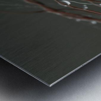 __ Metal print
