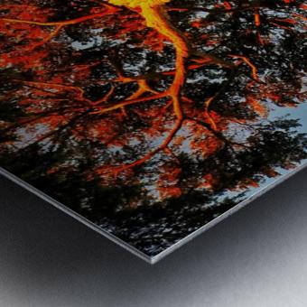 Tree on Fire Metal print