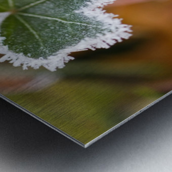 Frost On Autumn Leaves Metal print