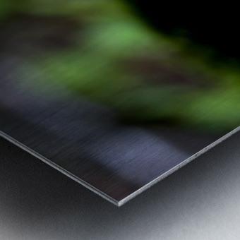 Closeup Of Mushroom Metal print