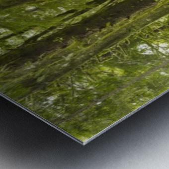 A Lush Forest; Tofino, British Columbia, Canada Metal print