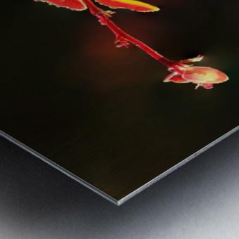 Close up of Berberis; Quebec, Canada Metal print