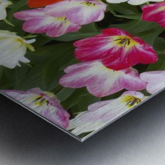 Flowers at Keukenhof Gardens; Amsterdam, Holland Metal print