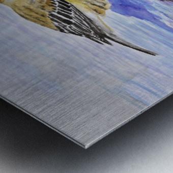Warbler Reflection Metal print