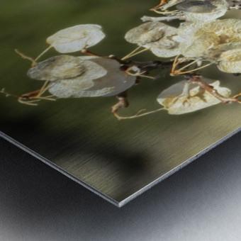 Weeds VP2 Metal print