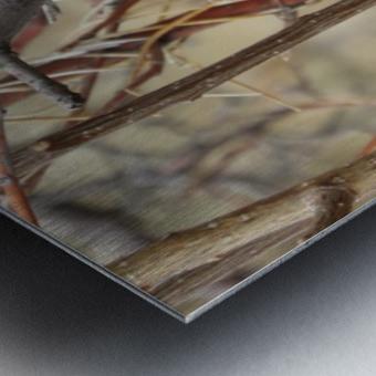 Twigs in the Sandia Mountains VP1 Metal print