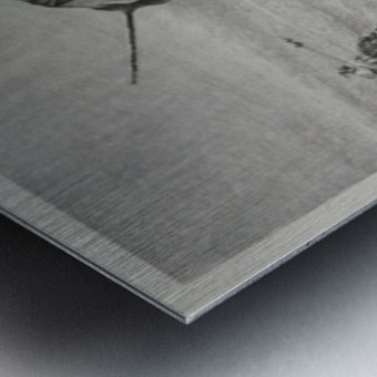 Danger in the desert Metal print