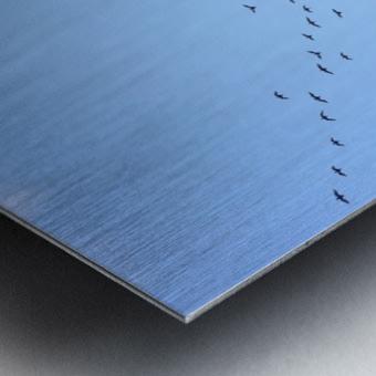 Flock of Geese 3  Metal print