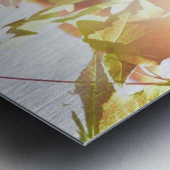 Leaves Macro 1  Metal print