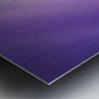 Purple Osteospermum Metal print
