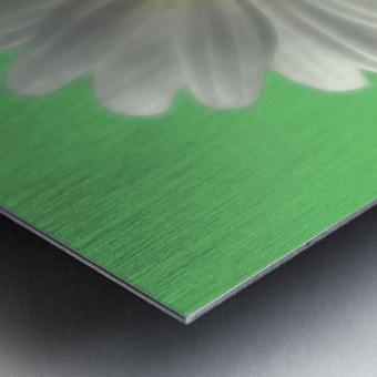 Soft bloom daisy Metal print