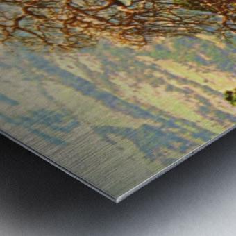 mtscotttreeone Metal print