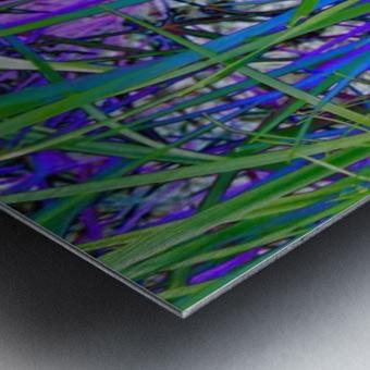blueeweeds Metal print