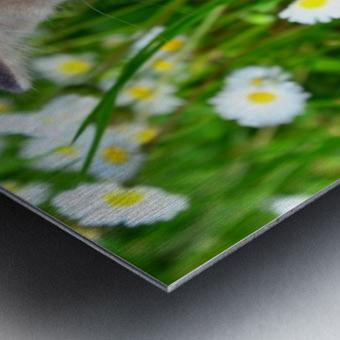 Smell the grass Metal print