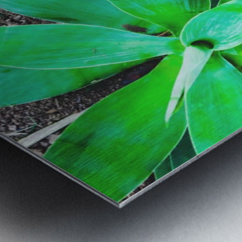 green leaf plant with sand background Metal print