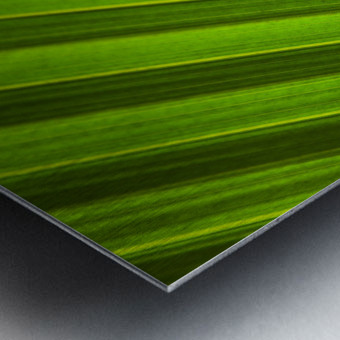 Graphic Detail Of Coconut Palm Leaf. Metal print