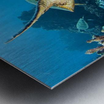 USA, Green Sea Turtle (Chelonia Mydas); Hawaii Metal print