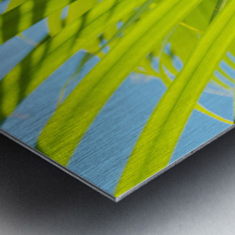 Close-Up Detail Of Light Green Palm Leaves With Shadow Pattern Against Blue Sky Metal print