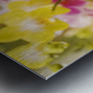 Hawaii, Field Of Pink And Yellow Orchids. Metal print