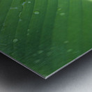 Close-Up Detail Green Banana Leaf With Droplets Of Water, Dew Metal print
