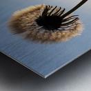 Dandelion Impression metal