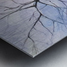 Walnut Tree Metal print