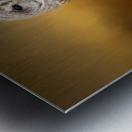Seen Metal print
