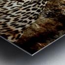 Jaguar Guyana Metal print